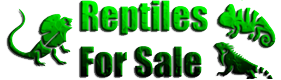 buy and sell reptiles